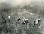 Scouts planting trees at youth camp