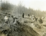 Boy Scouts planting pines