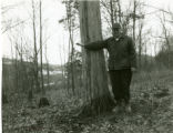 Large cedar tree for timber