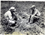 Mr. Parton and Mr. Clement in potato patch