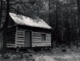 Log cabin in pine woods
