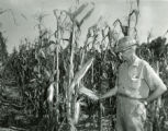 C.H. Allmon inspecting rotation corn crop
