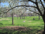 Centennial Park: the lawn in spring