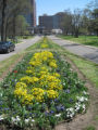 Centennial Park: planted median at entrance