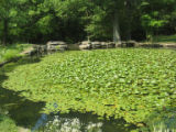 Cheekwood: pond
