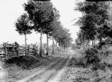 Kern Photograph Collection; Murfreesboro, the lane.