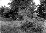 Kern Photograph Collection; Murfreesboro, Cedar Woods.