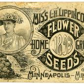 Minneapolis Seedswomen Catalogs